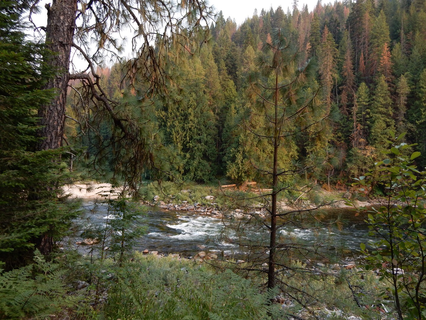 The Clearwater River at Lolo Pass.