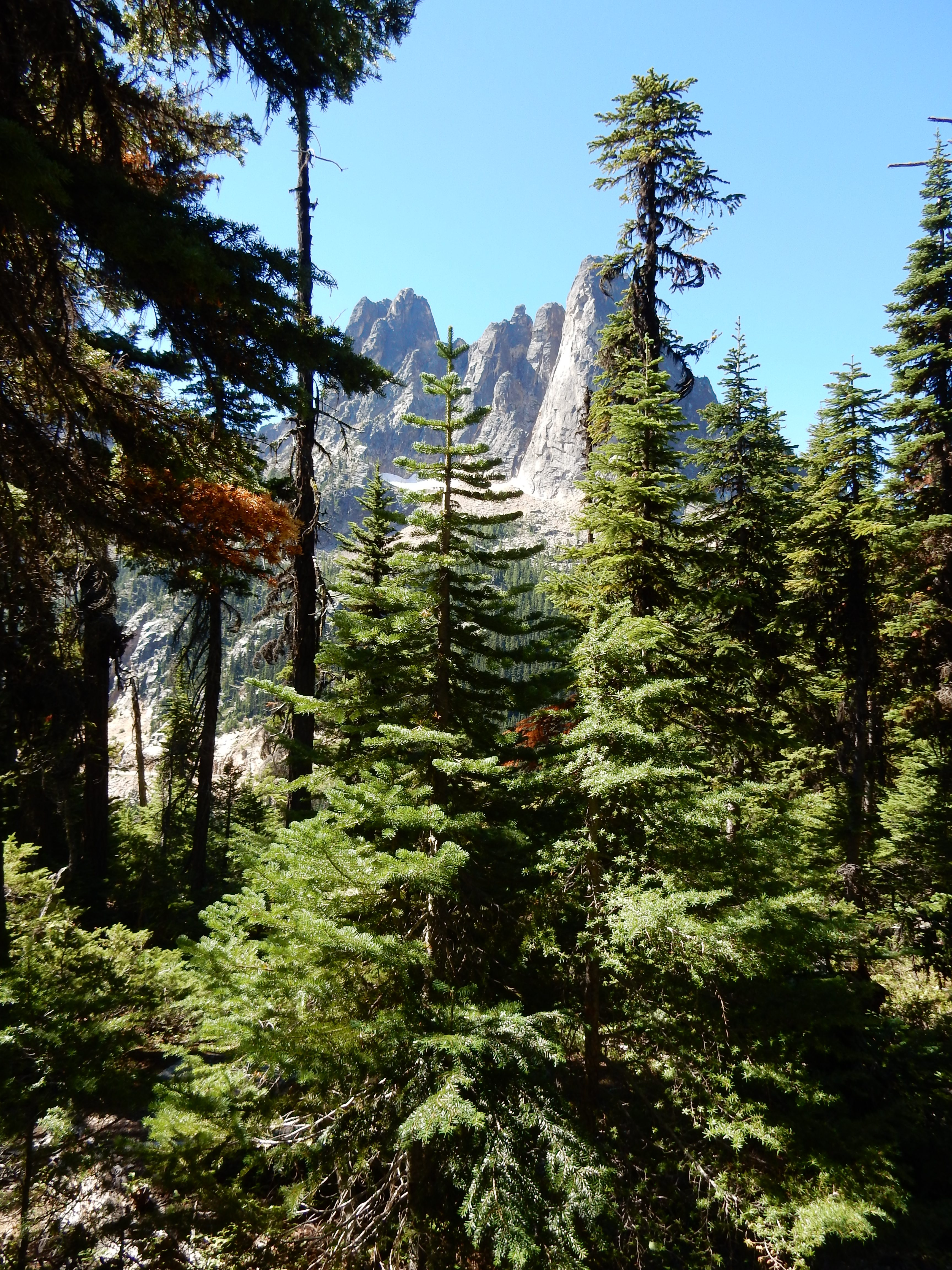 A view of the mountains from the path to the Washington Pass overlook.