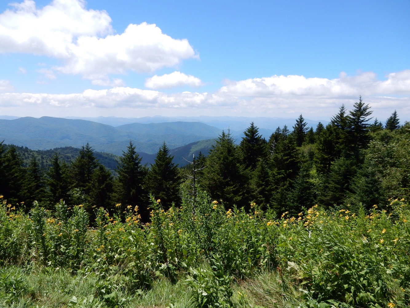 View from the Blue Ridge Parkway.